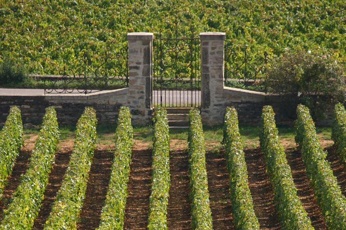 portemontrachet-bourgogne-vignes-bouchardpereetfils