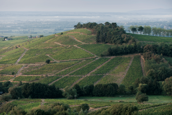 chateaudeponcie-beaujolais-vignes-maisonsetdomaineshenriot