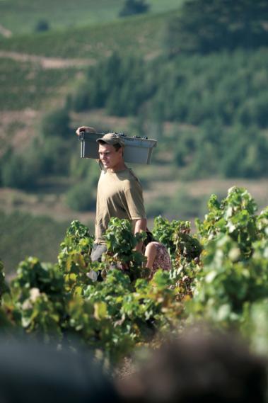 chateaudeponcie-vendanges-vignes-maisonsetdomaineshenriot