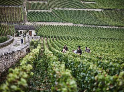 bouchardpereetfils-beaunegreves-vignedelenfantjesus-cabotte-vendanges-premiercru-terroir-bourgogne