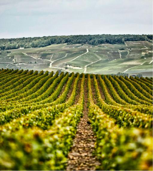 champagnehenriot-vignes-reims-chardonnay-pinotnoir-pinotmeunier