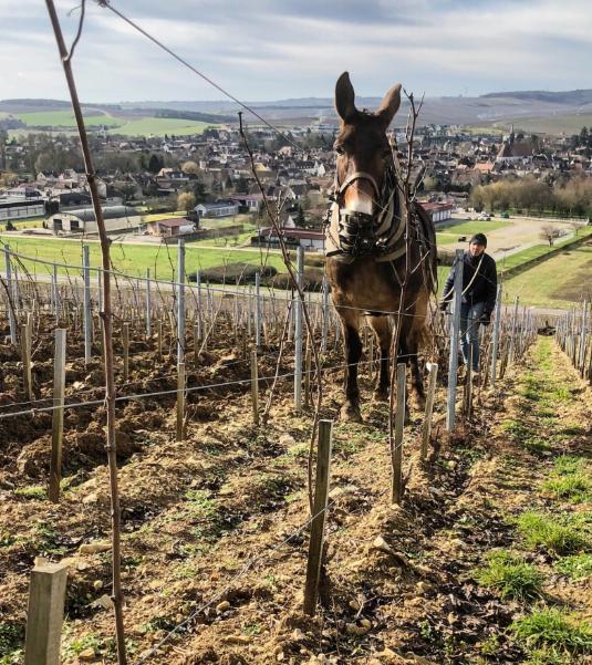 williamfevre-biodynamie-agriculturebiologique-chablis-chardonnay