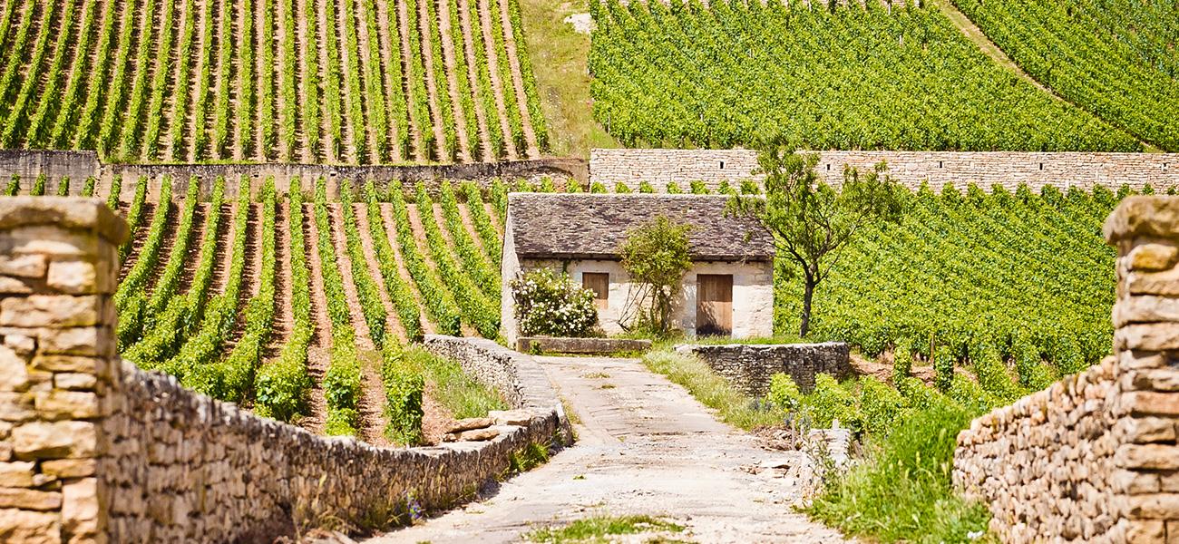 vignedelenfantjesus-beaunegreves-cabotte-bourgogne-viniconique-bouchardpereetfils-maisonsetdomaineshenriot