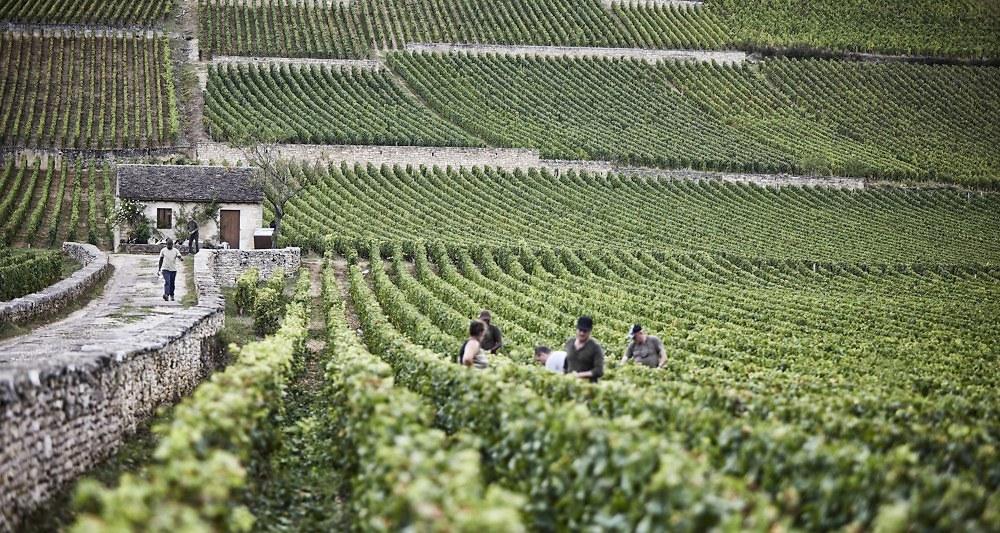 beaunegreves-vignedelenfantjesus-appellationiconique-premiercru-bouchardpereetfils-article-lesechos