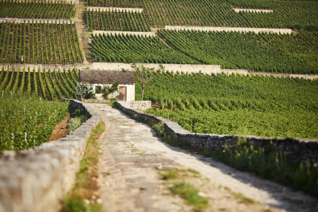 bourgogneaujourdhui-vignoble-leplusgranddomainebiodebourgogne-bouchardpereetfils-williamfevre-certificationbio-208hectares-cabotte-vignedelenfantjesus